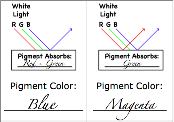 Example of Reflection and Absorption for Blue and Magenta Paper